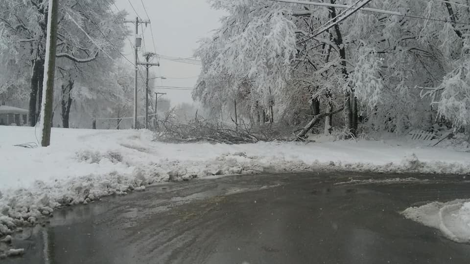 Broken limbs lie on the ground, as nearby trees and power lines suffer under the weight of heavy snow.